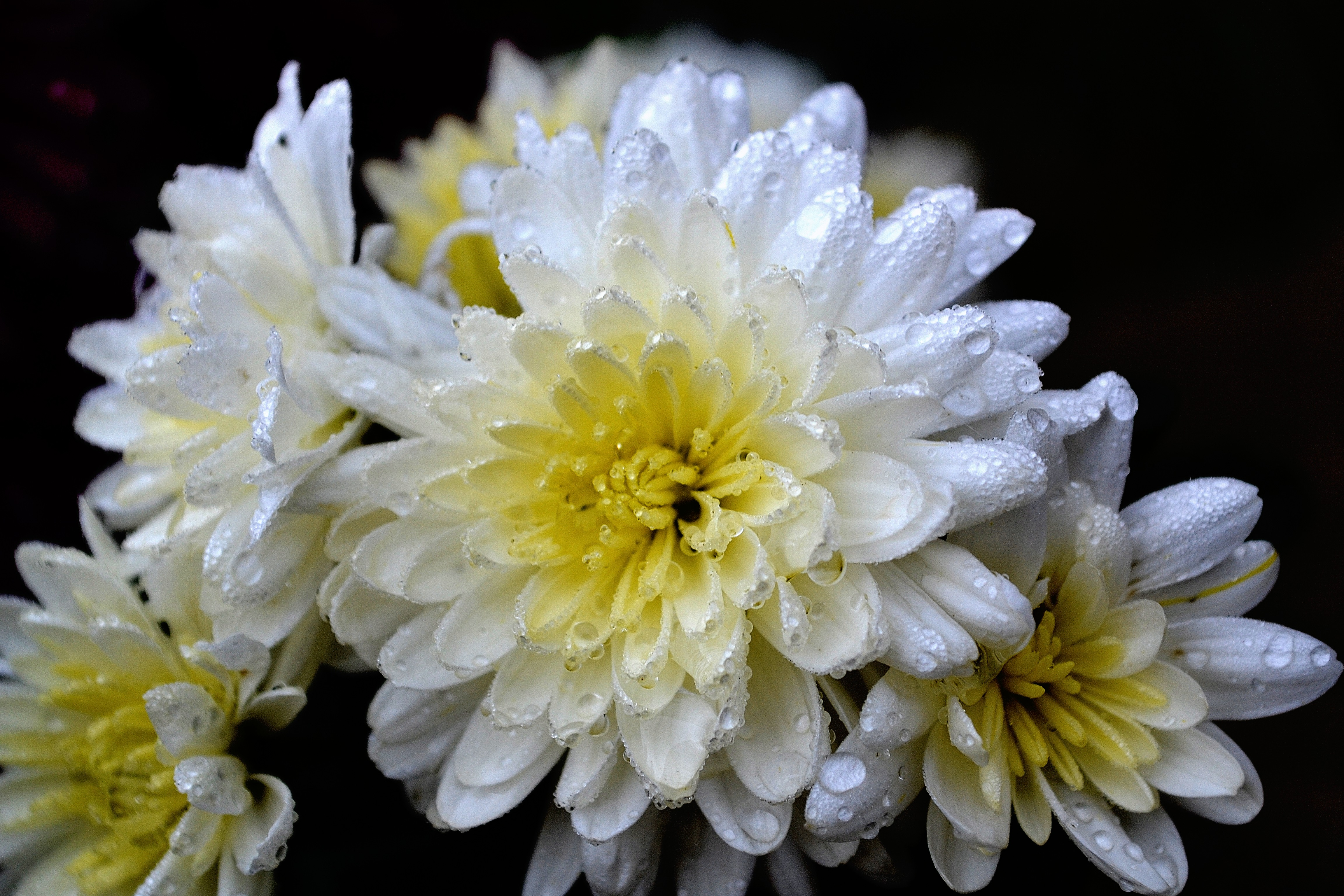 Frosted Flowers October 19, 2014