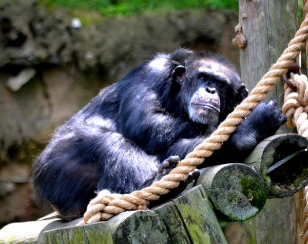 John Ball Park Zoo 7-2-2015 029