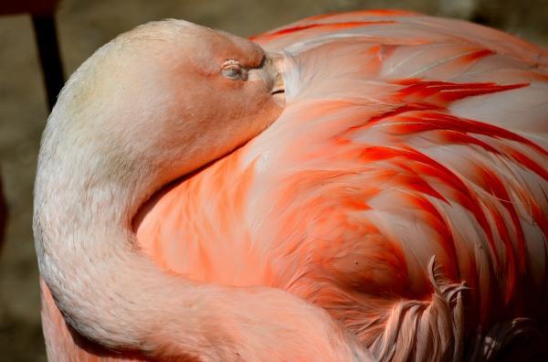 John Ball Park Zoo 7-2-2015 036