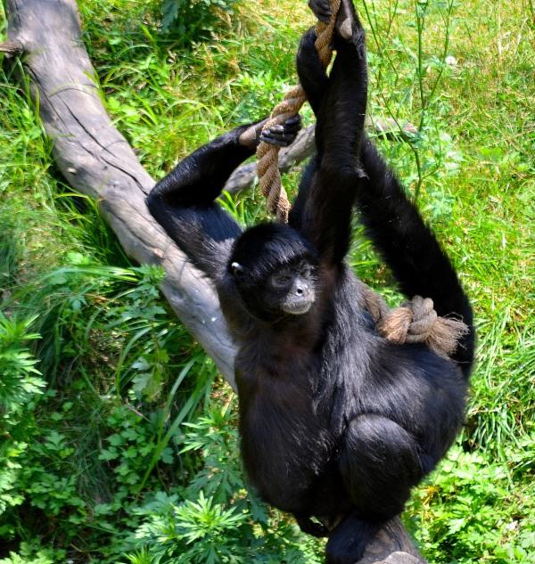 John Ball Park Zoo 7-2-2015 051