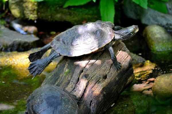 John Ball Park Zoo 7-2-2015 055